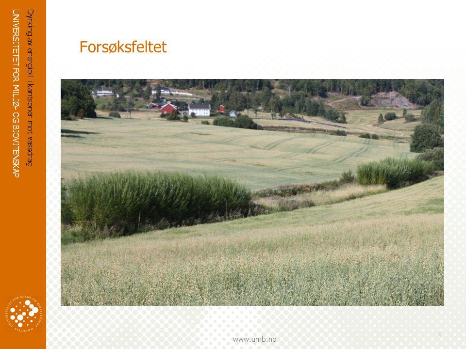 UNIVERSITETET FOR MILJØ- OG BIOVITENSKAP www.umb.no Dyrking av energipil i kantsoner mot vassdrag 4 Forsøksfeltet