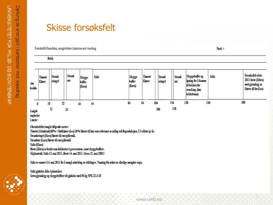 UNIVERSITETET FOR MILJØ- OG BIOVITENSKAP www.umb.no Dyrking av energipil i kantsoner mot vassdrag 5 Skisse forsøksfelt