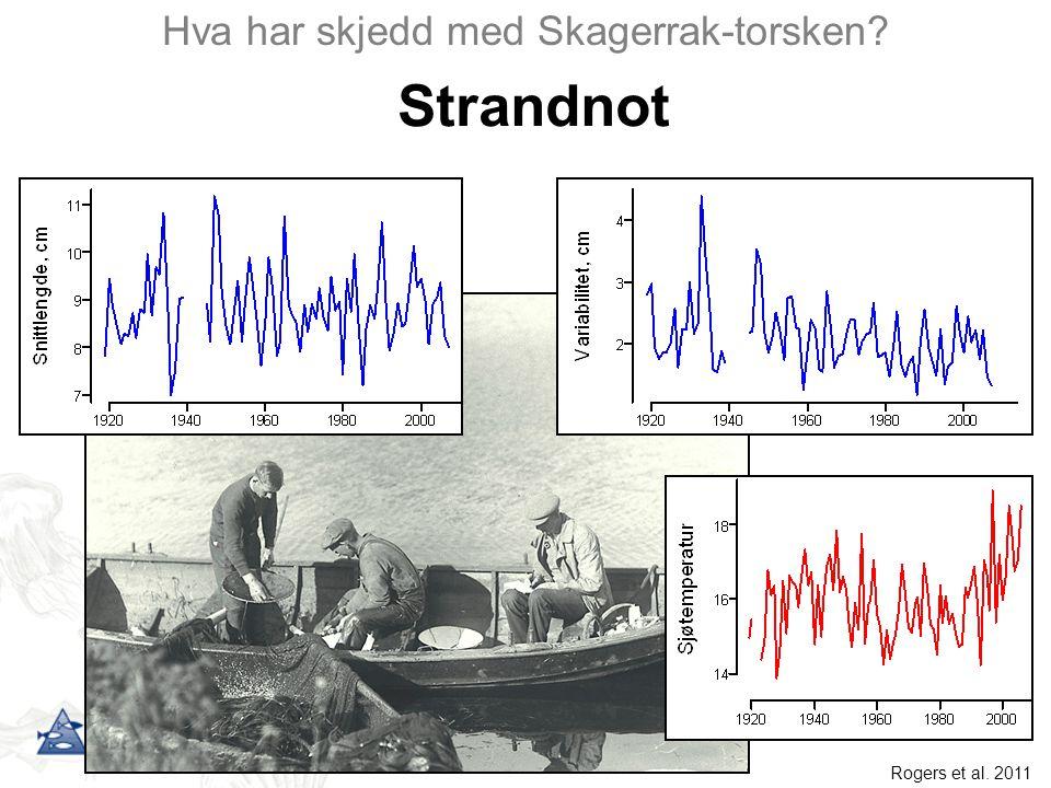 Hva har skjedd med Skagerrak-torsken? Strandnot Rogers et al. 2011