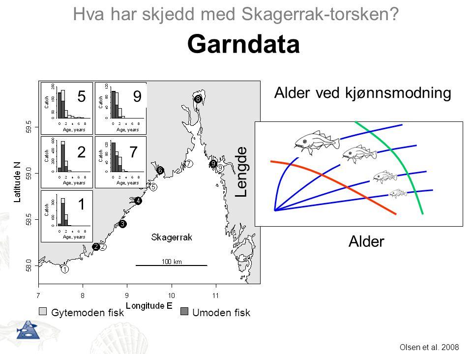 Alder Lengde Garndata Hva har skjedd med Skagerrak-torsken? Gytemoden fiskUmoden fisk 1 2 5 7 9 Alder ved kjønnsmodning Olsen et al. 2008