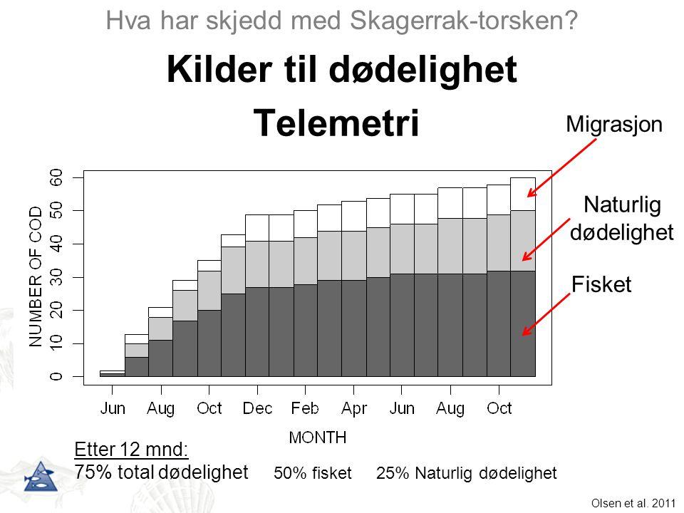 Kilder til dødelighet Hva har skjedd med Skagerrak-torsken? Telemetri Olsen et al. 2011 Migrasjon Naturlig dødelighet Fisket Etter 12 mnd: 75% total d