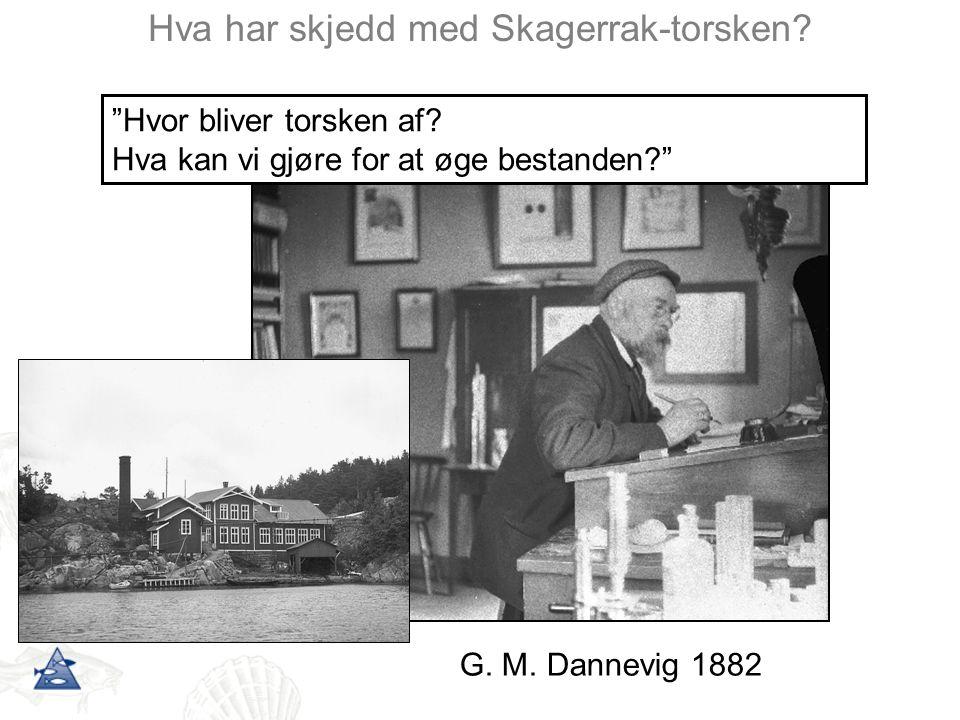 """Hva har skjedd med Skagerrak-torsken? G. M. Dannevig 1882 """"Hvor bliver torsken af? Hva kan vi gjøre for at øge bestanden?"""""""