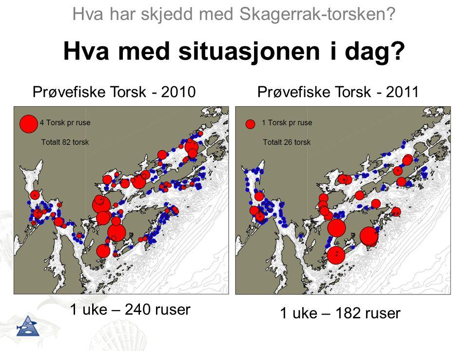Hva har skjedd med Skagerrak-torsken? Hva med situasjonen i dag? Prøvefiske Torsk - 2011Prøvefiske Torsk - 2010 1 uke – 240 ruser 1 uke – 182 ruser