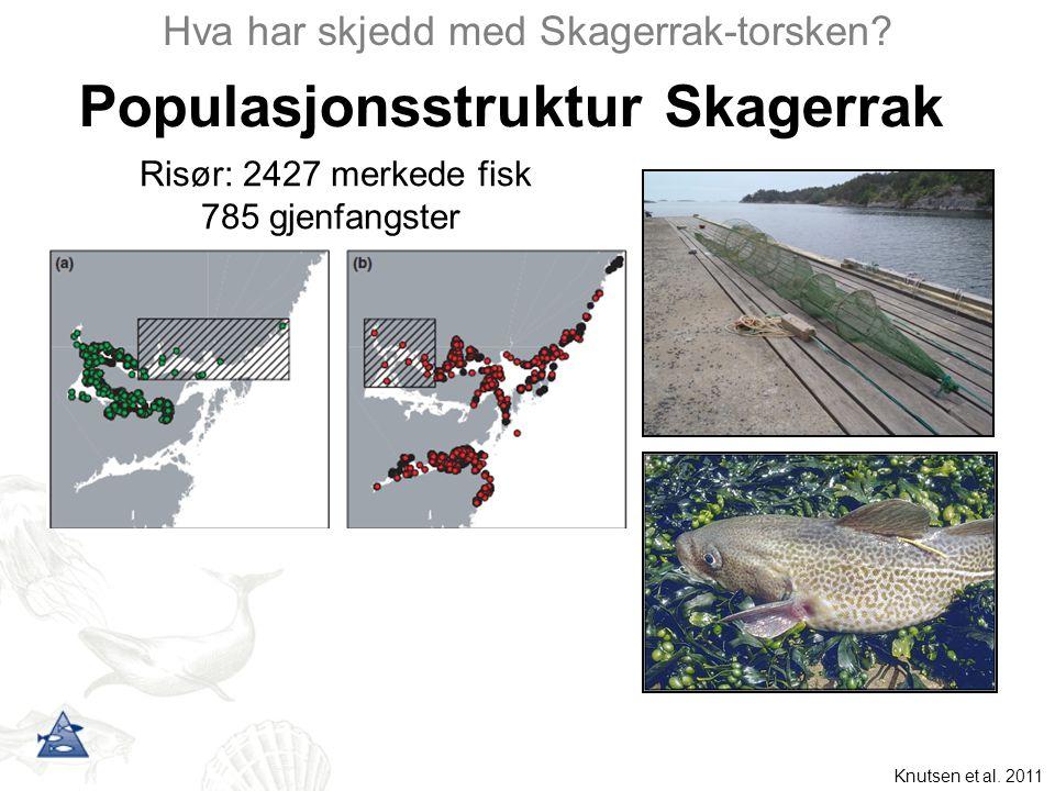 Knutsen et al. 2011 Populasjonsstruktur Skagerrak Hva har skjedd med Skagerrak-torsken? Risør: 2427 merkede fisk 785 gjenfangster