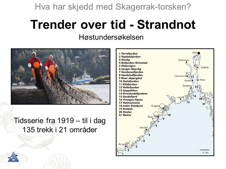 Trender over tid - Strandnot Hva har skjedd med Skagerrak-torsken? Tidsserie fra 1919 – til i dag 135 trekk i 21 områder Høstundersøkelsen