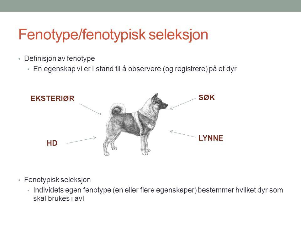 Fenotype/fenotypisk seleksjon • Definisjon av fenotype • En egenskap vi er i stand til å observere (og registrere) på et dyr • Fenotypisk seleksjon •