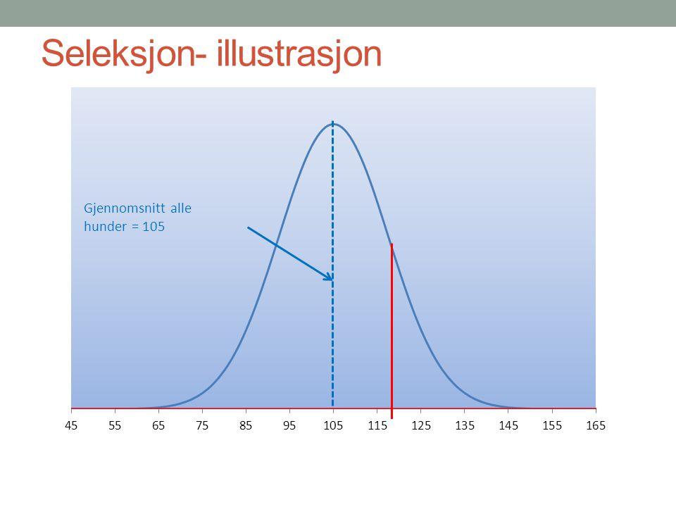 Analyser av jaktegenskaper NEG SLEKTSKAP FENOTYPER Arvbarhet Vekting Seleksjon 1. 2. 3. 4. 5.
