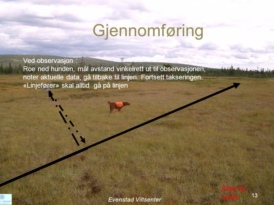 Ved observasjon : Roe ned hunden, mål avstand vinkelrett ut til observasjonen, noter aktuelle data, gå tilbake til linjen.