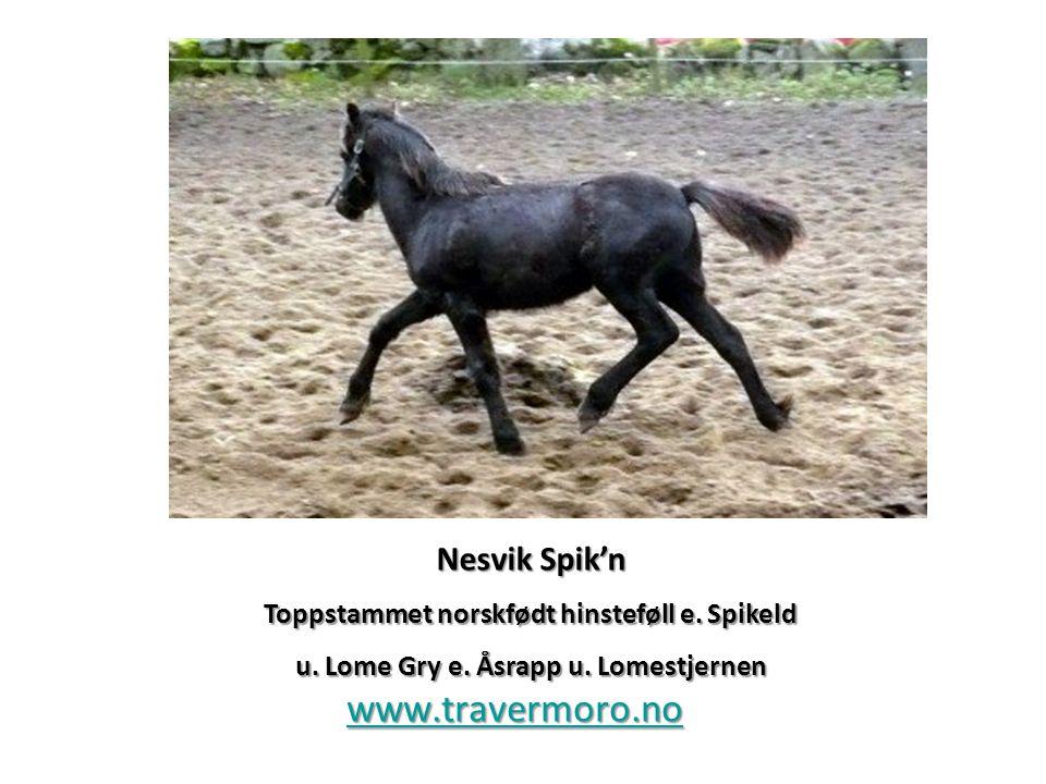 www.travermoro.no Nesvik Spik'n Toppstammet norskfødt hinsteføll e. Spikeld u. Lome Gry e. Åsrapp u. Lomestjernen