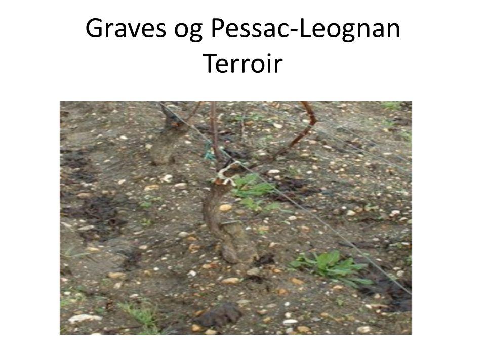 Graves og Pessac-Leognan Historikk • Dette er sammen med det høytliggende St.