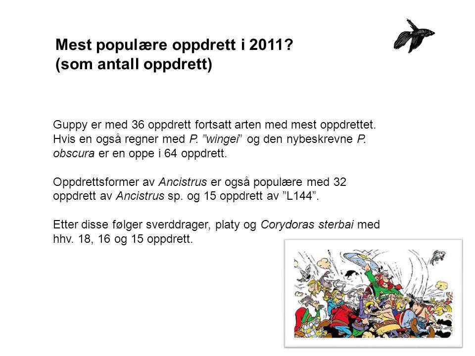 """Mest populære oppdrett i 2011? (som antall oppdrett) Guppy er med 36 oppdrett fortsatt arten med mest oppdrettet. Hvis en også regner med P. """"wingei"""""""