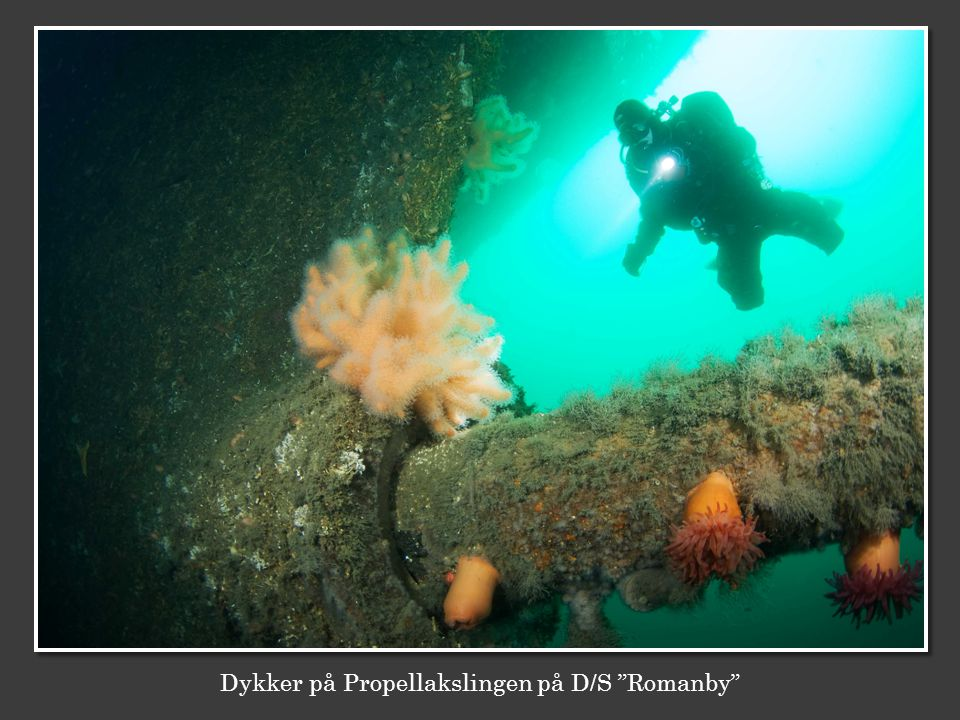 """Dykker på Propellakslingen på D/S """"Romanby"""""""