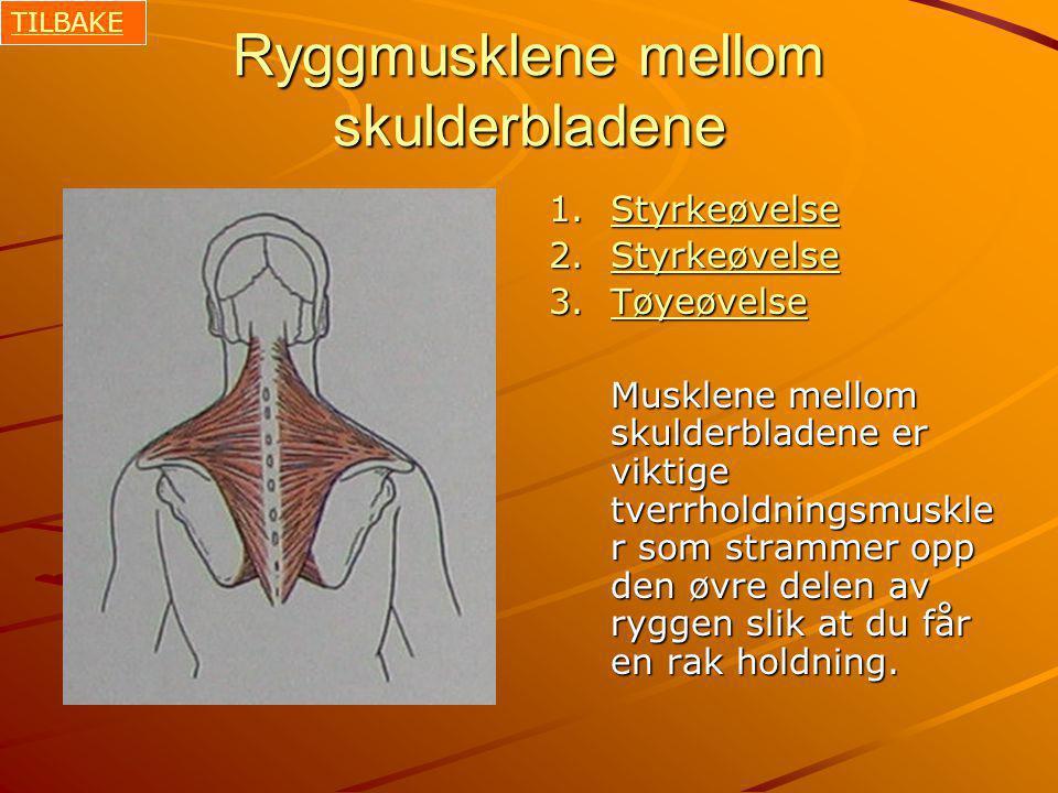 Ryggmusklene mellom skulderbladene 1.Styrkeøvelse Styrkeøvelse 2.Styrkeøvelse Styrkeøvelse 3.Tøyeøvelse Tøyeøvelse Musklene mellom skulderbladene er viktige tverrholdningsmuskle r som strammer opp den øvre delen av ryggen slik at du får en rak holdning.