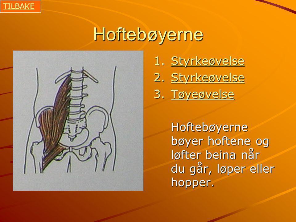 Hoftebøyerne 1.Styrkeøvelse Styrkeøvelse 2.Styrkeøvelse Styrkeøvelse 3.Tøyeøvelse Tøyeøvelse Hoftebøyerne bøyer hoftene og løfter beina når du går, løper eller hopper.