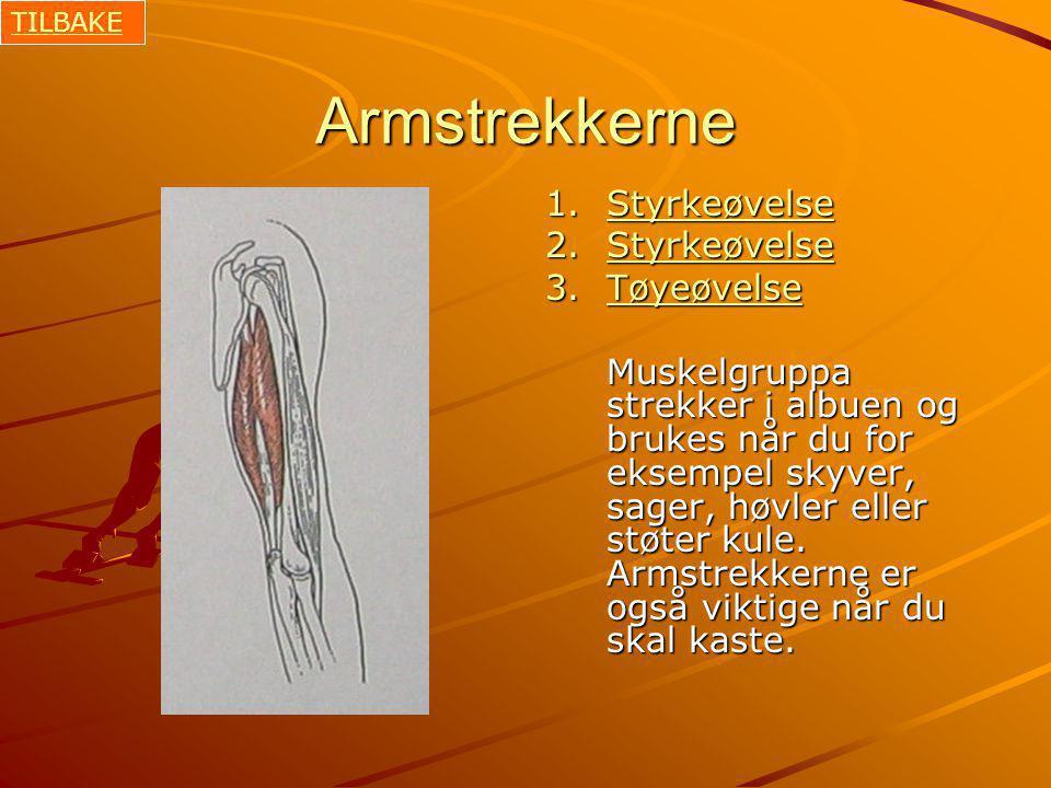 Armstrekkerne 1.Styrkeøvelse Styrkeøvelse 2.Styrkeøvelse Styrkeøvelse 3.Tøyeøvelse Tøyeøvelse Muskelgruppa strekker i albuen og brukes når du for eksempel skyver, sager, høvler eller støter kule.