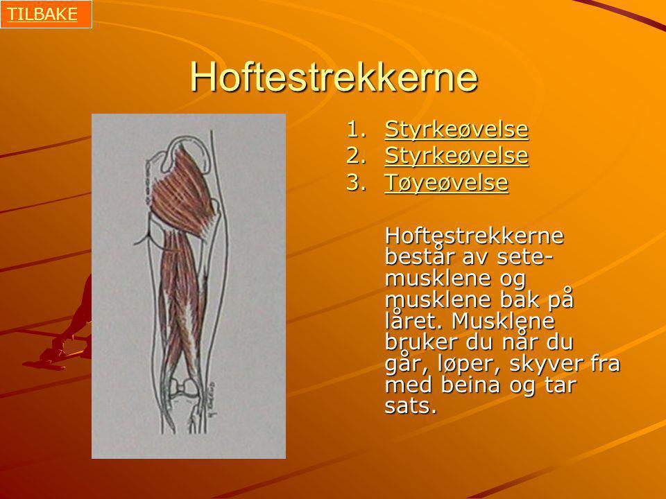 Hoftestrekkerne 1.Styrkeøvelse Styrkeøvelse 2.Styrkeøvelse Styrkeøvelse 3.Tøyeøvelse Tøyeøvelse Hoftestrekkerne består av sete- musklene og musklene bak på låret.