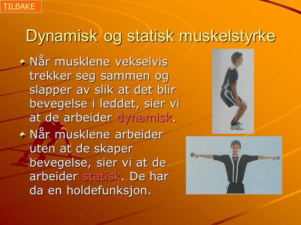 Dynamisk og statisk muskelstyrke Når musklene vekselvis trekker seg sammen og slapper av slik at det blir bevegelse i leddet, sier vi at de arbeider dynamisk.