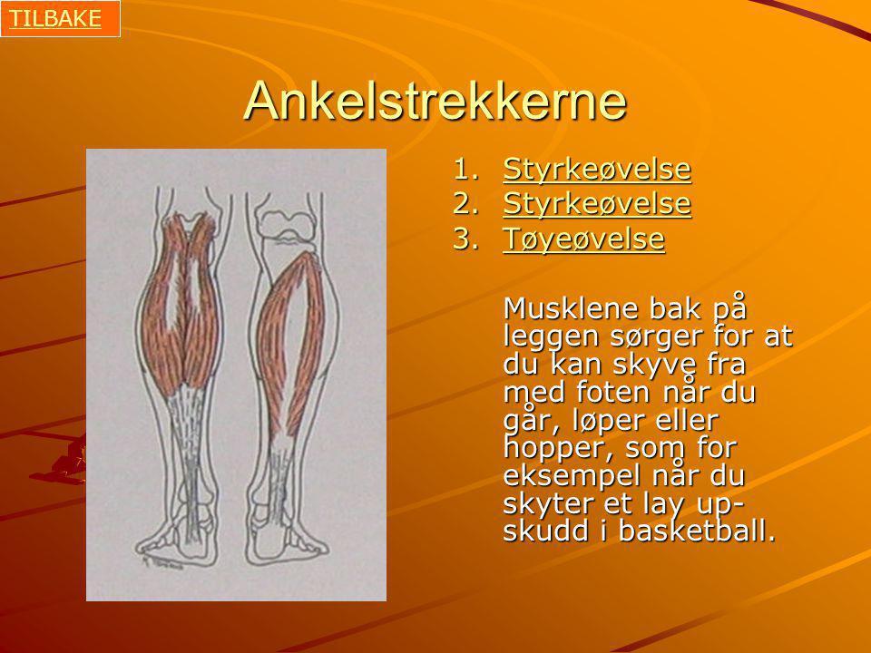 Ankelstrekkerne 1.Styrkeøvelse Styrkeøvelse 2.Styrkeøvelse Styrkeøvelse 3.Tøyeøvelse Tøyeøvelse Musklene bak på leggen sørger for at du kan skyve fra med foten når du går, løper eller hopper, som for eksempel når du skyter et lay up- skudd i basketball.