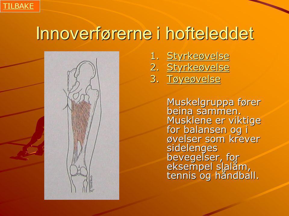 Innoverførerne i hofteleddet 1.Styrkeøvelse Styrkeøvelse 2.Styrkeøvelse Styrkeøvelse 3.Tøyeøvelse Tøyeøvelse Muskelgruppa fører beina sammen.