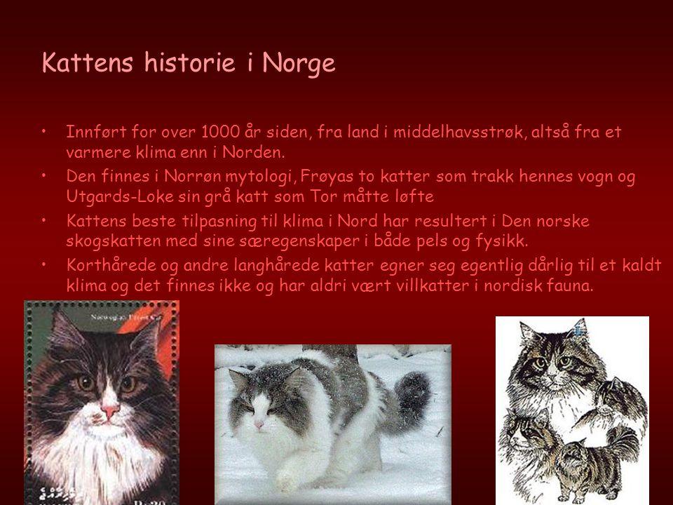 Kattens historie i Norge •Innført for over 1000 år siden, fra land i middelhavsstrøk, altså fra et varmere klima enn i Norden. •Den finnes i Norrøn my