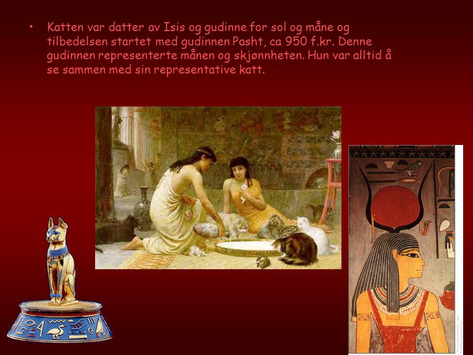 •Katten var datter av Isis og gudinne for sol og måne og tilbedelsen startet med gudinnen Pasht, ca 950 f.kr.