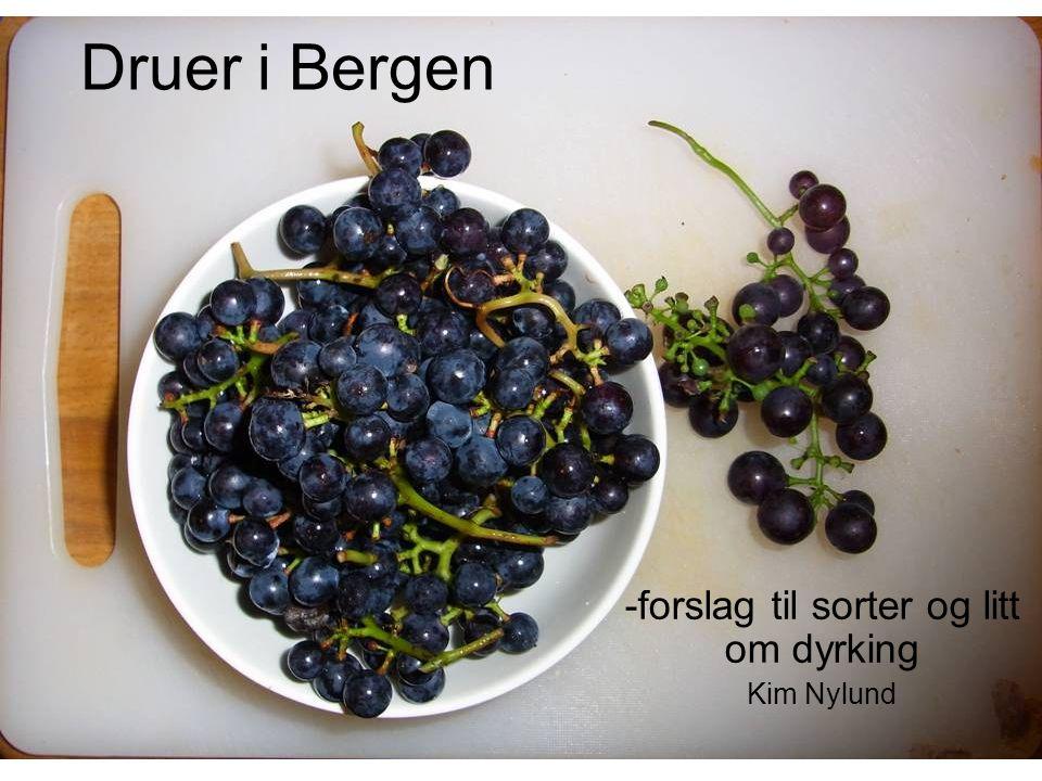 Druer i Bergen -forslag til sorter og litt om dyrking Kim Nylund
