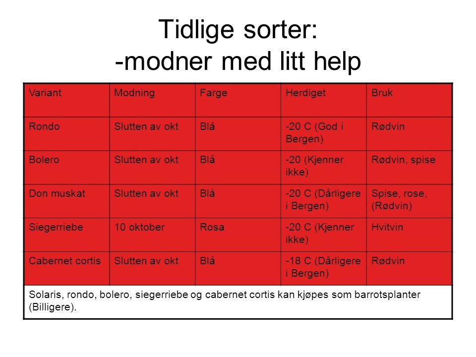Tidlige sorter: -modner med litt help VariantModningFargeHerdigetBruk RondoSlutten av oktBlå-20 C (God i Bergen) Rødvin BoleroSlutten av oktBlå-20 (Kj