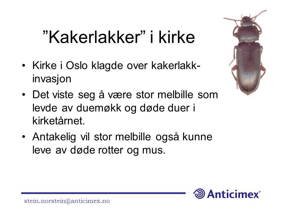 """stein.norstein@anticimex.no """"Kakerlakker"""" i kirke •Kirke i Oslo klagde over kakerlakk- invasjon •Det viste seg å være stor melbille som levde av duemø"""