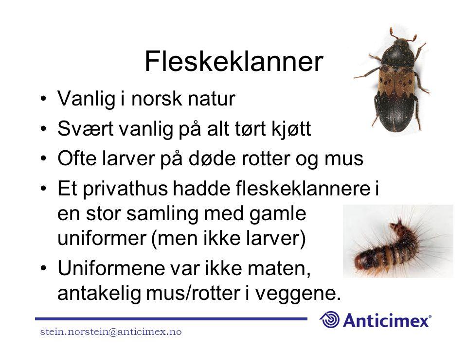 stein.norstein@anticimex.no Fleskeklanner •Vanlig i norsk natur •Svært vanlig på alt tørt kjøtt •Ofte larver på døde rotter og mus •Et privathus hadde