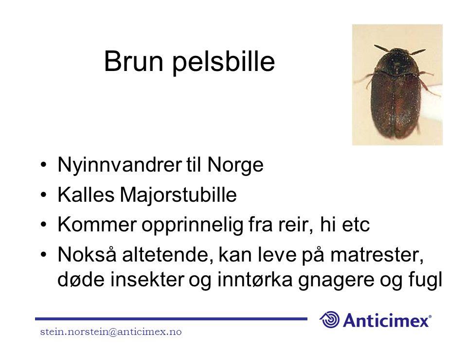 stein.norstein@anticimex.no Brun pelsbille •Nyinnvandrer til Norge •Kalles Majorstubille •Kommer opprinnelig fra reir, hi etc •Nokså altetende, kan le