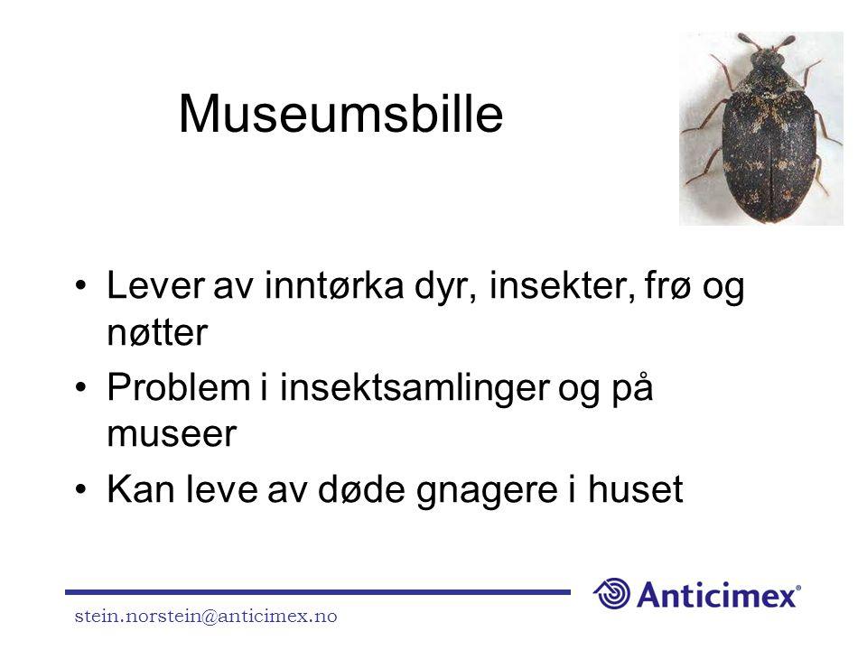 stein.norstein@anticimex.no Museumsbille •Lever av inntørka dyr, insekter, frø og nøtter •Problem i insektsamlinger og på museer •Kan leve av døde gna