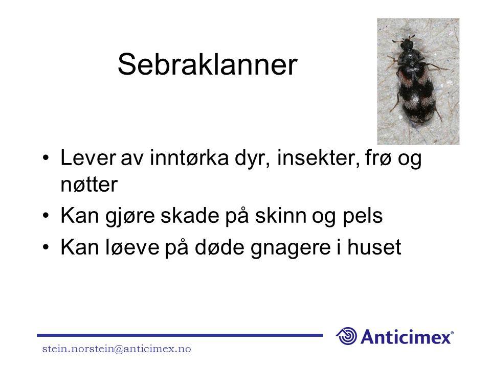 stein.norstein@anticimex.no Sebraklanner •Lever av inntørka dyr, insekter, frø og nøtter •Kan gjøre skade på skinn og pels •Kan løeve på døde gnagere