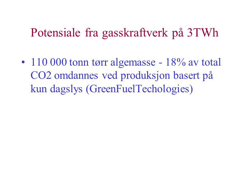 Potensiale fra gasskraftverk på 3TWh •110 000 tonn tørr algemasse - 18% av total CO2 omdannes ved produksjon basert på kun dagslys (GreenFuelTechologies)