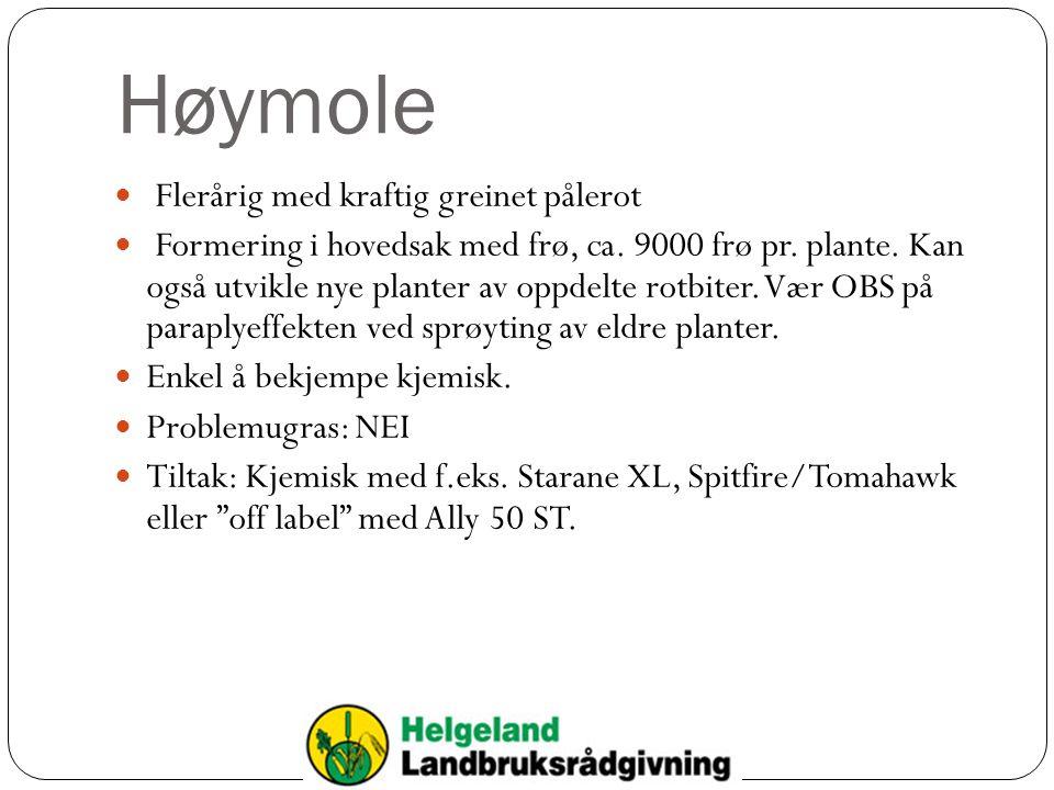 Høymole  Flerårig med kraftig greinet pålerot  Formering i hovedsak med frø, ca.
