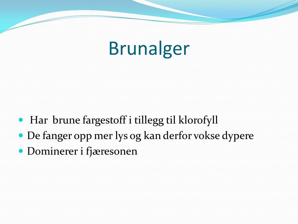 Brunalger  Har brune fargestoff i tillegg til klorofyll  De fanger opp mer lys og kan derfor vokse dypere  Dominerer i fjæresonen