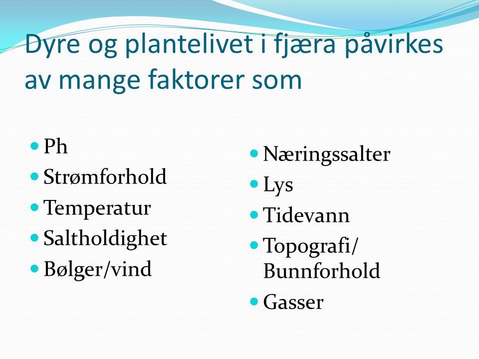Dyre og plantelivet i fjæra påvirkes av mange faktorer som  Ph  Strømforhold  Temperatur  Saltholdighet  Bølger/vind  Næringssalter  Lys  Tide
