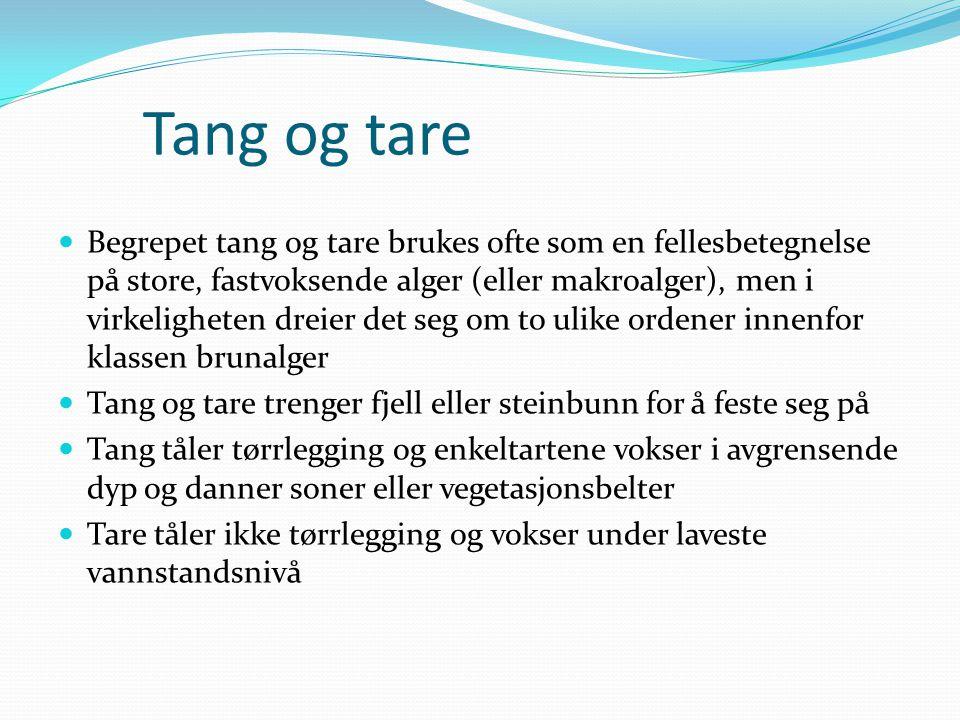 Tang og tare  Begrepet tang og tare brukes ofte som en fellesbetegnelse på store, fastvoksende alger (eller makroalger), men i virkeligheten dreier d