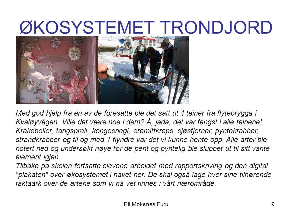 ØKOSYSTEMET TRONDJORD Eli Moksnes Furu9 Med god hjelp fra en av de foresatte ble det satt ut 4 teiner fra flytebrygga i Kvaløyvågen. Ville det være no