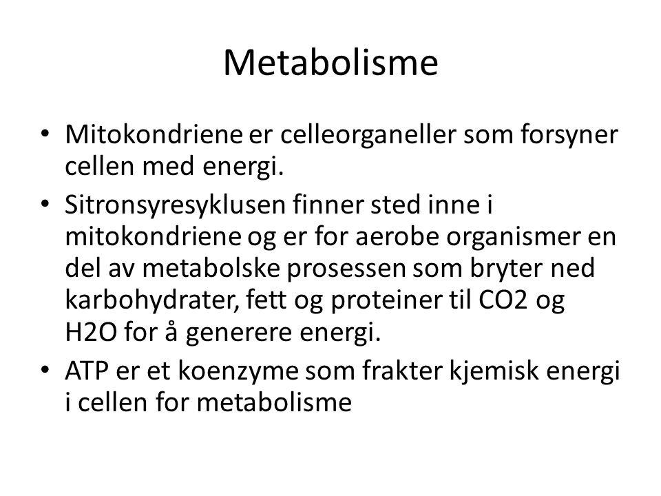 Metabolisme • Mitokondriene er celleorganeller som forsyner cellen med energi. • Sitronsyresyklusen finner sted inne i mitokondriene og er for aerobe