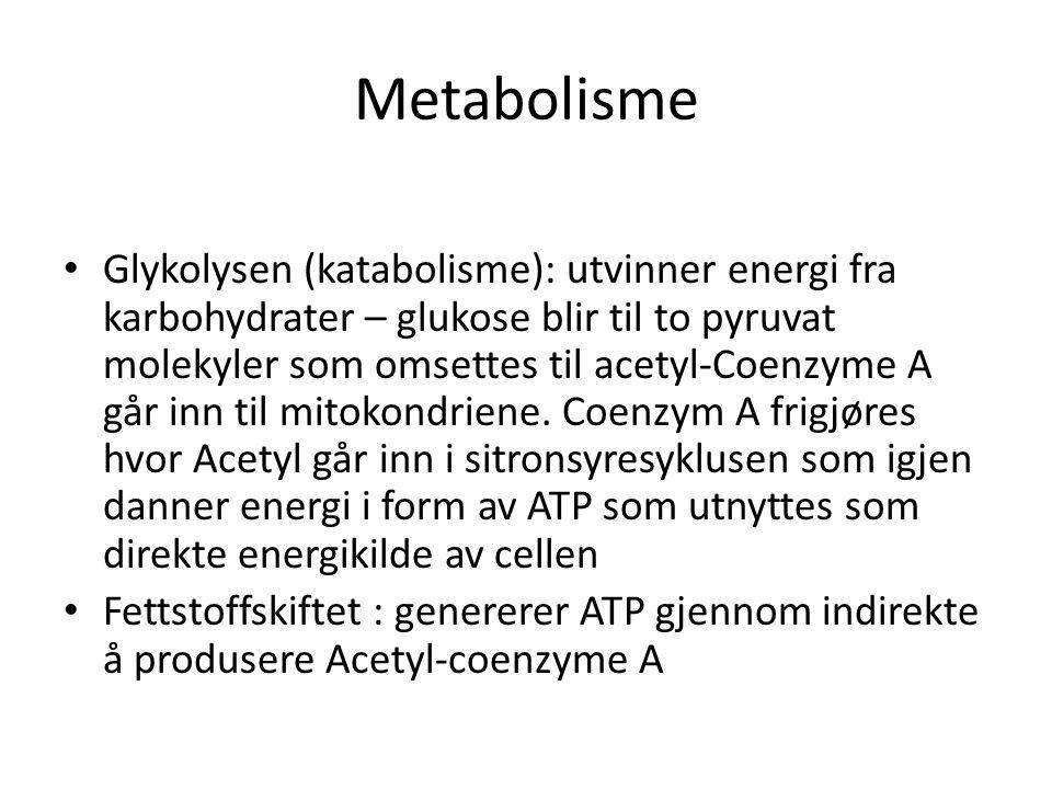Metabolisme • Glykolysen (katabolisme): utvinner energi fra karbohydrater – glukose blir til to pyruvat molekyler som omsettes til acetyl-Coenzyme A går inn til mitokondriene.