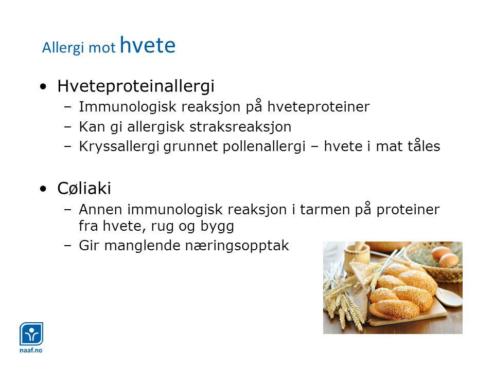 Allergi mot hvete •Hveteproteinallergi –Immunologisk reaksjon på hveteproteiner –Kan gi allergisk straksreaksjon –Kryssallergi grunnet pollenallergi –