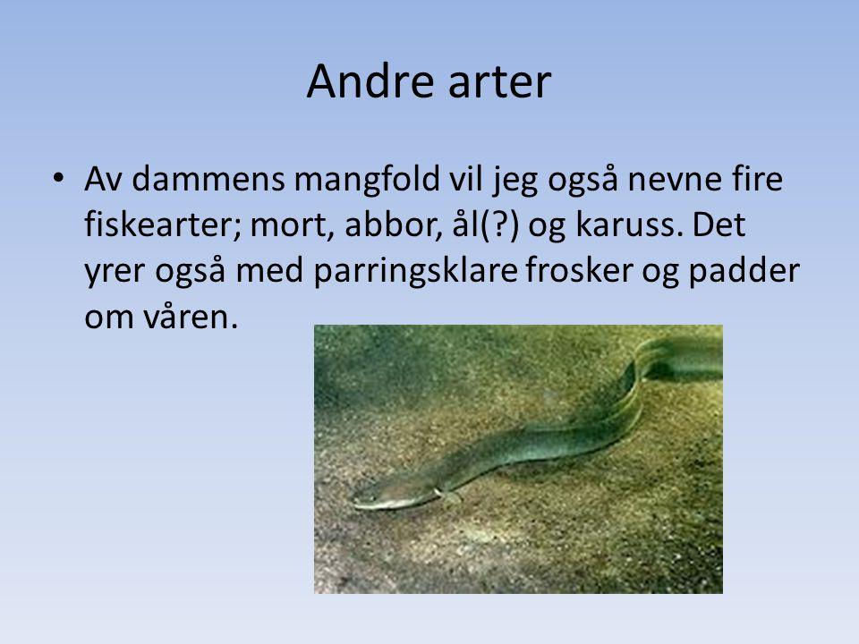 Andre arter • Av dammens mangfold vil jeg også nevne fire fiskearter; mort, abbor, ål(?) og karuss. Det yrer også med parringsklare frosker og padder