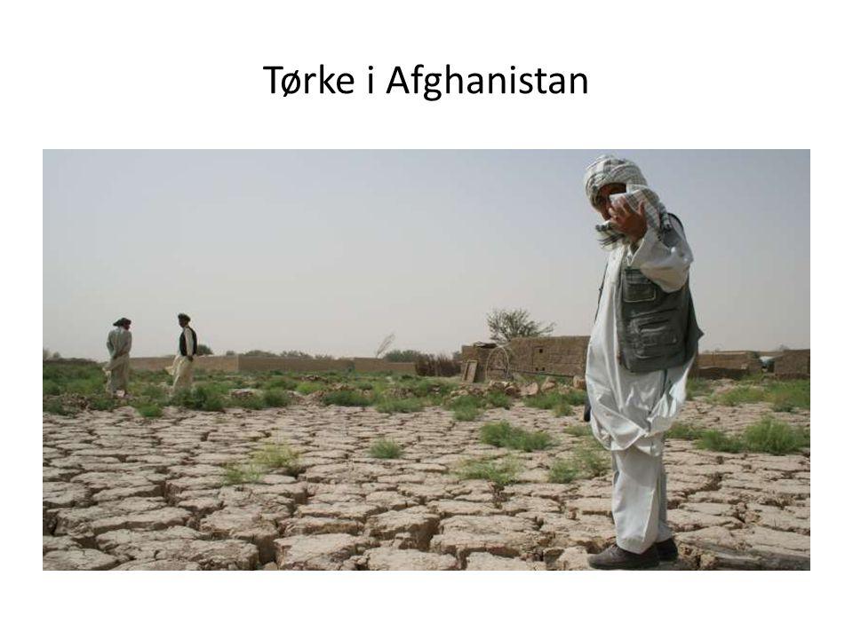 Tørke i Afghanistan