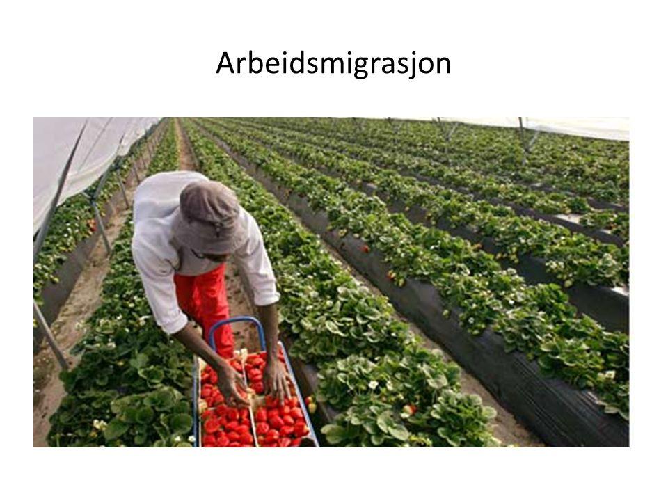 Arbeidsmigrasjon