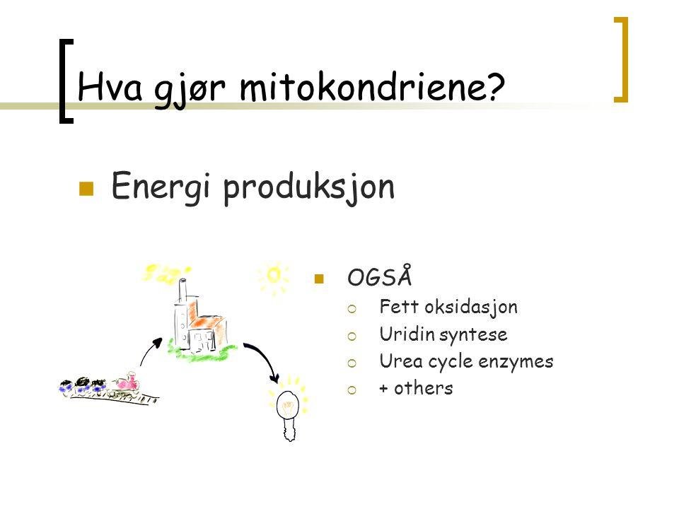 Respirasjons - kjede karbohydrat Fett, Protein Metabolisme Krebs ß-oxidation NADH Flavoproteins ATP ENERGI