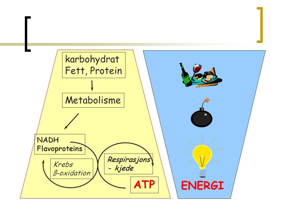 Respirasjonskjeden  5 store komplekser  Ligger i den indre mitokondrie membranen Inner mito membrane OUT IN I II III IV V c c Q Q