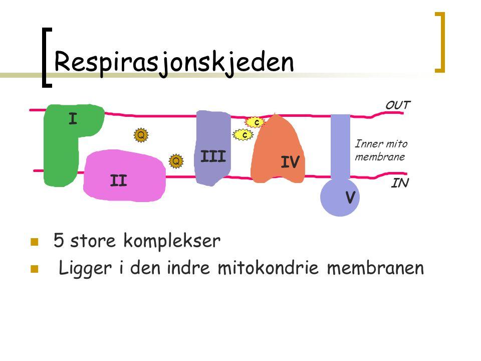 MEN, i tillegg Energy production Reactive oxygen species Apoptosis Neurodegeneration Ischaemia Drug metabolism Cancer
