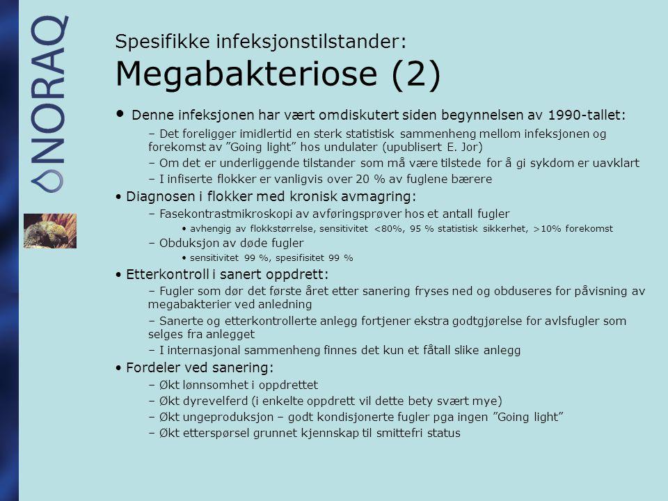 Spesifikke infeksjonstilstander: Megabakteriose (3) Vet Rec.