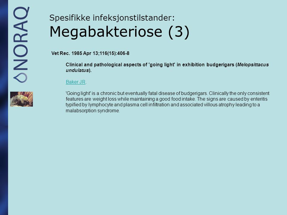 Spesifikke infeksjonstilstander: Megabakteriose (3) Vet Rec. 1985 Apr 13;116(15):406-8 Clinical and pathological aspects of 'going light' in exhibitio