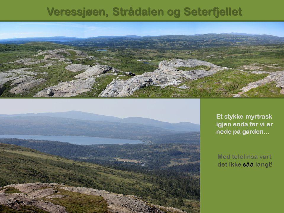 Veressjøen, Strådalen og Seterfjellet Et stykke myrtrask igjen enda før vi er nede på gården… Med telelinsa vart det ikke såå langt!